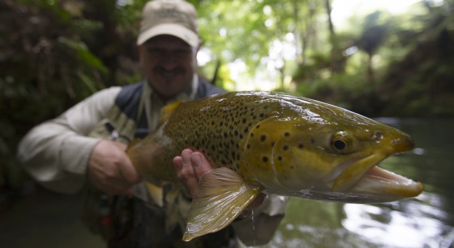 Stunning trout caught on the rivers of New Zealand